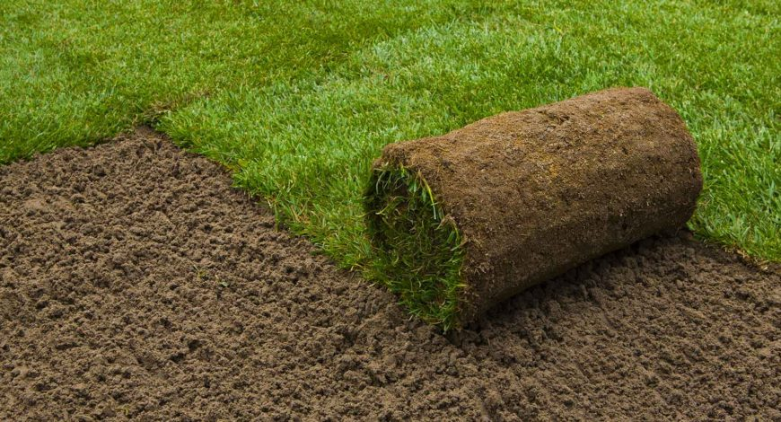 Sod Here Today Lawn Tomorrow
